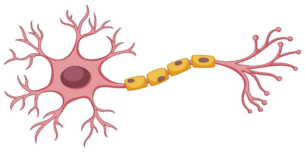 Neurology_1.jpg